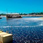 Serviços de limpeza de lagoa